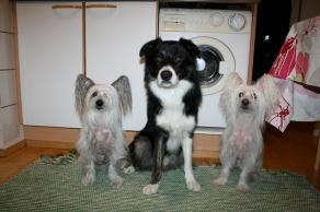 Duo-trio